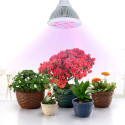 VicTsing 36W E27 LED Plant Growing Light for $20 + free shipping