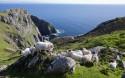 Irish Tourism 7Nt Ireland Tour coupon: 15% off