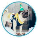 Zappos-Sponsored Pet Adoption for free