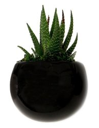 LiveTrends Live Plants at Amazon: Up to 46% off