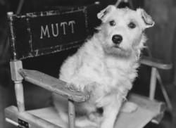 Dog Film Festival in New York for $5